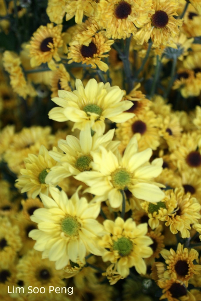 Flowers for Wesak