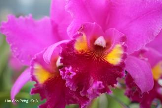 Flora Fest 2013 006-001