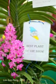 Flora Fest 2013 090-001