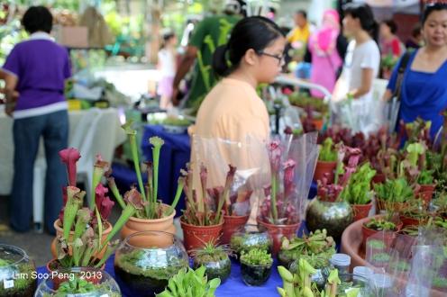 Flora Fest 2013 157-001