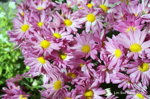 Flora Fest 2013 174-001