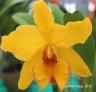FloralFest Take2 005-001
