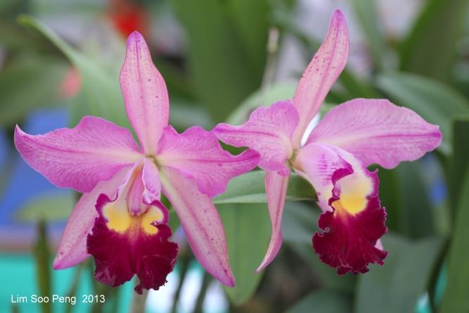 FloralFest Take2 022-001