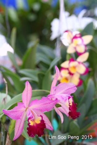 FloralFest Take2 026-001