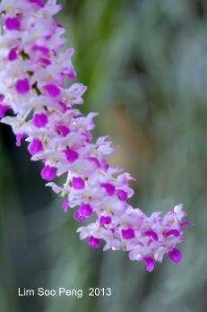 FloralFest Take2 037-001