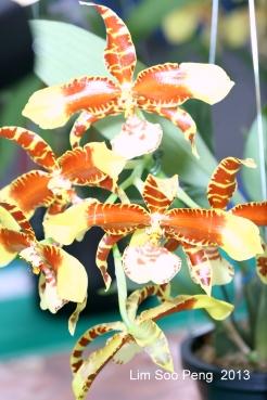 FloralFest Take2 053-001