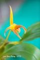 FloralFest Take2 059-001