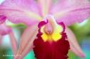 FloralFest Take2 065-001