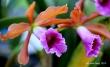 FloralFest Take2 069-001