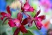 FloralFest Take2 073-001
