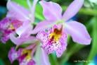 FloralFest Take2 075-001