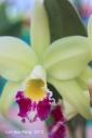 FloralFest Take2 085-001