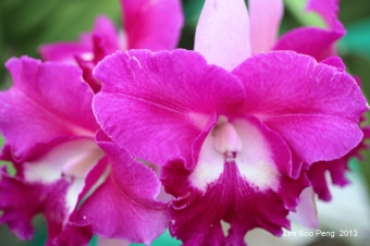 FloralFest Take2 092-001