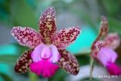 FloralFest Take2 101-001