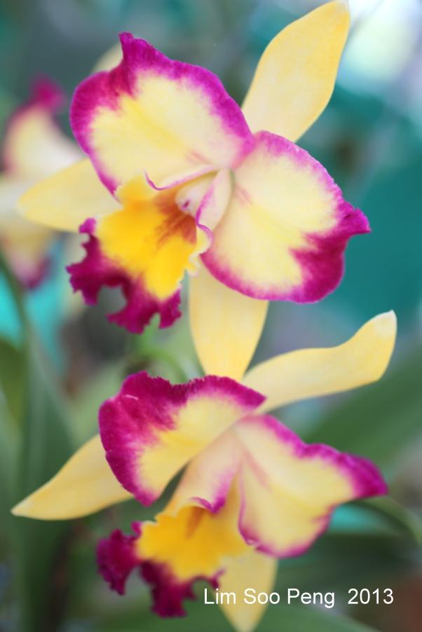 FloralFest Take2 105-001