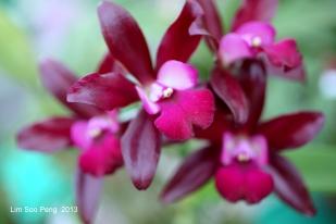 FloralFest Take2 108-001
