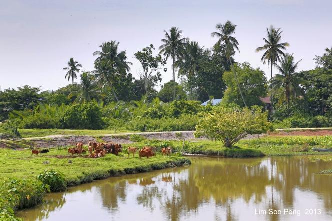 SeberangPerai Shoot 059-001