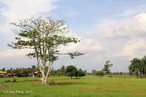 SeberangPerai Shoot 143-001