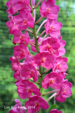 FlowerFest2014 023