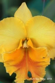 FlowerFest2014 70D 028