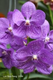 FlowerFest2014 70D 056