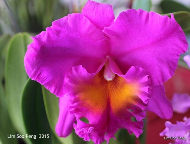 1-FloralFest 2015 126