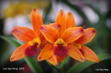 1-FloralFest 2015 139