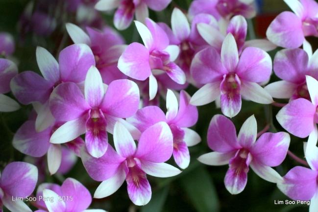 1-FloralFest 2015 186