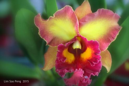 FloralFest 2015 096