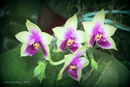 FloralFest 2015 168