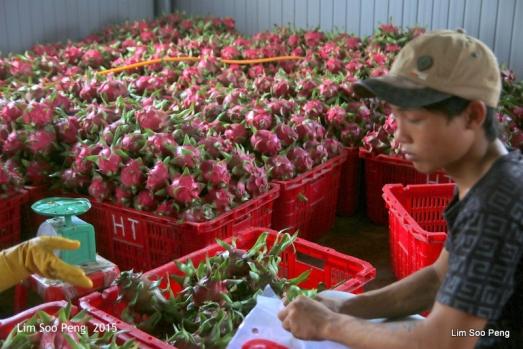 1-Vietnam Photo Trip Part 1 70D 1227