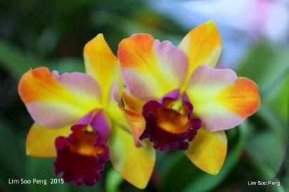 1-FloralFest 2015 141