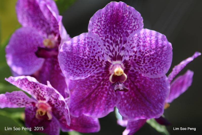 1-FloralFest 2015 333