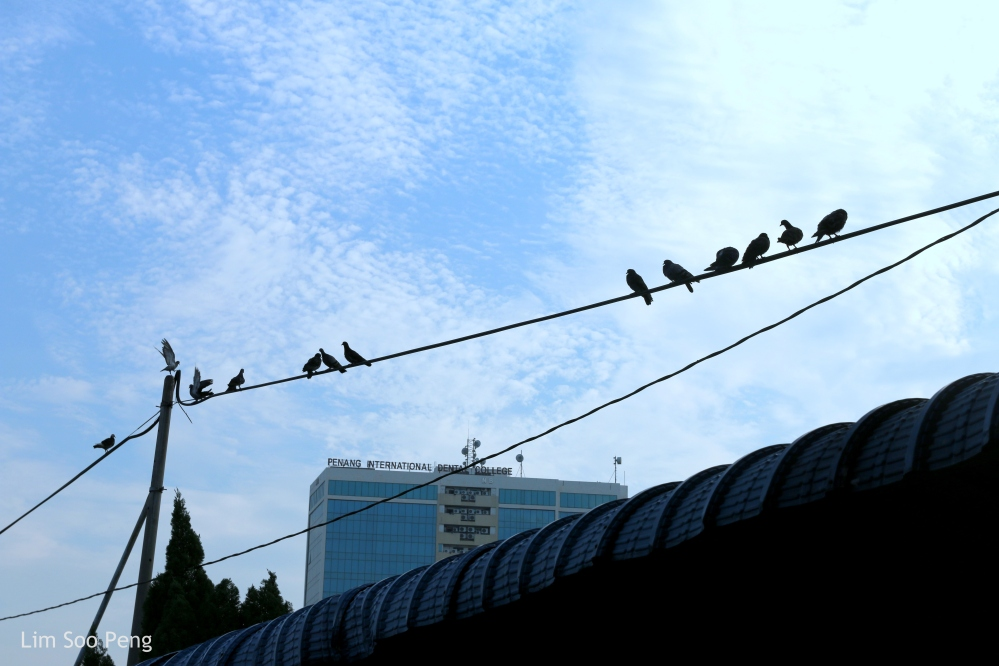 Birds on the wire.