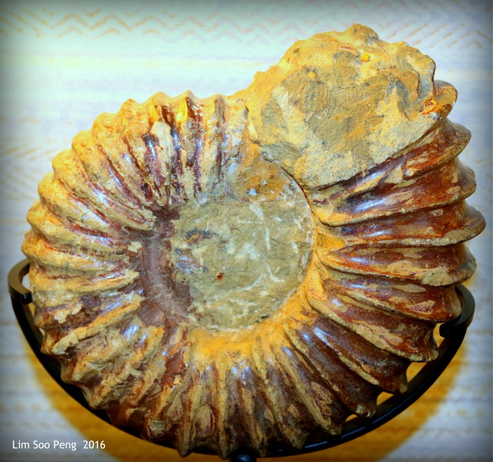 """Curve of the Sea Shell"""