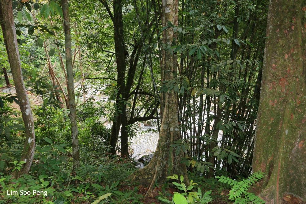 The Waterfall and its Surroundings at Lata Bayu, Kedah.