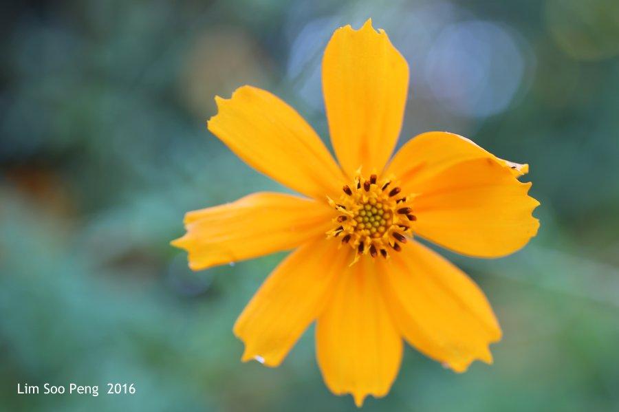 Flora of Myanmar (Burma)