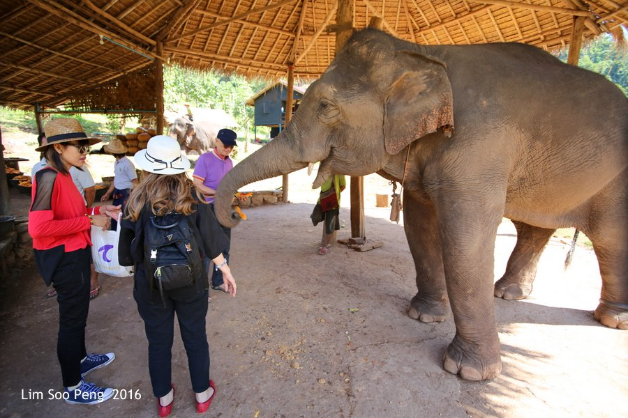 Day 3.2 ~ Visit to the Green Hill Valley Elephant Camp