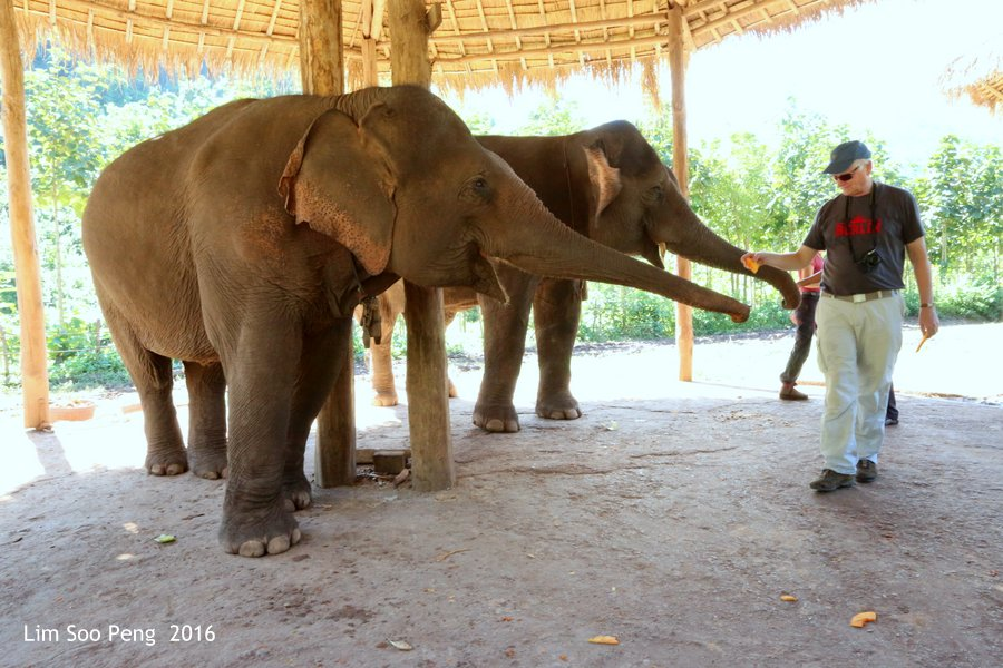 Day 3.3 ~ Visit to the Green Hill Valley Elephant Camp