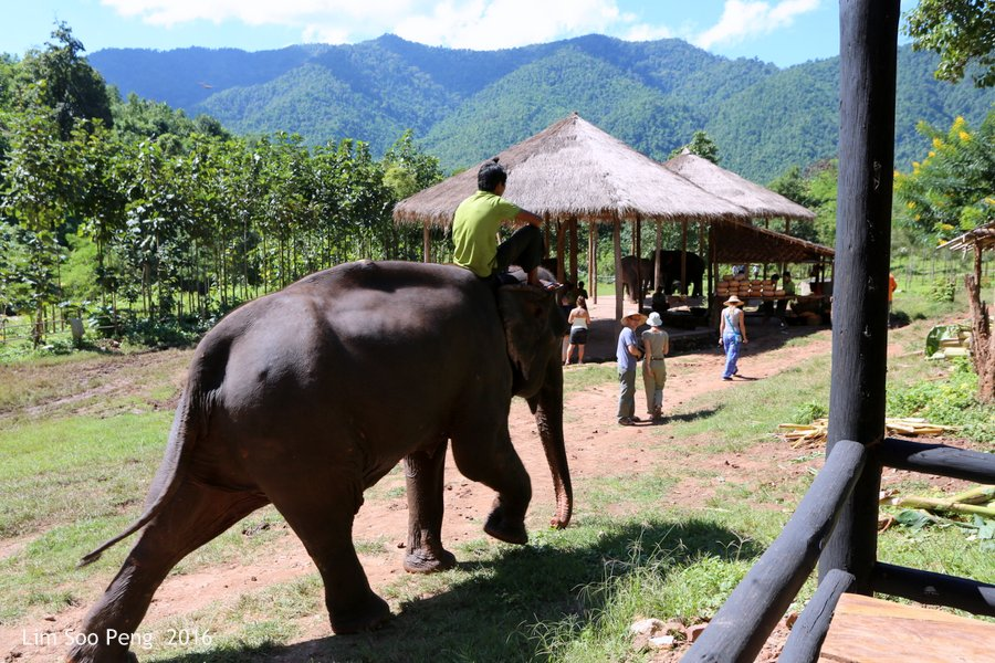 Day 3.4 ~ Visit to the Green Hill Valley Elephant Camp