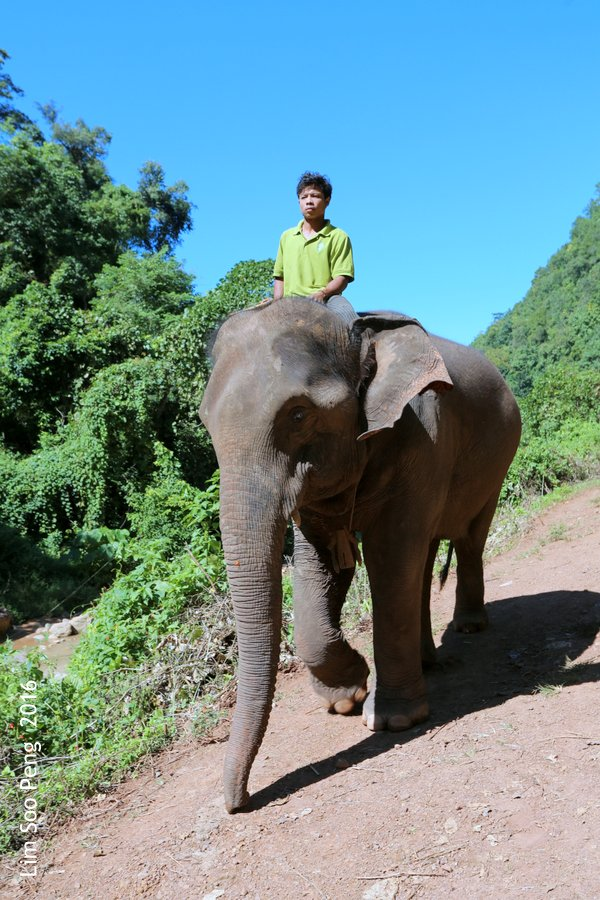 The Mahout on the Elephant of Myanmar.