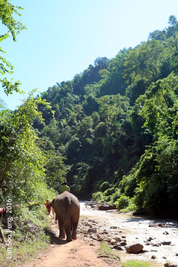 Day 3.5 ~ Visit to the Green Hill Valley Elephant Camp