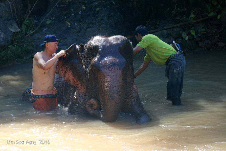 Day 3.6 ~ Visit to the Green Hill Valley Elephant Camp