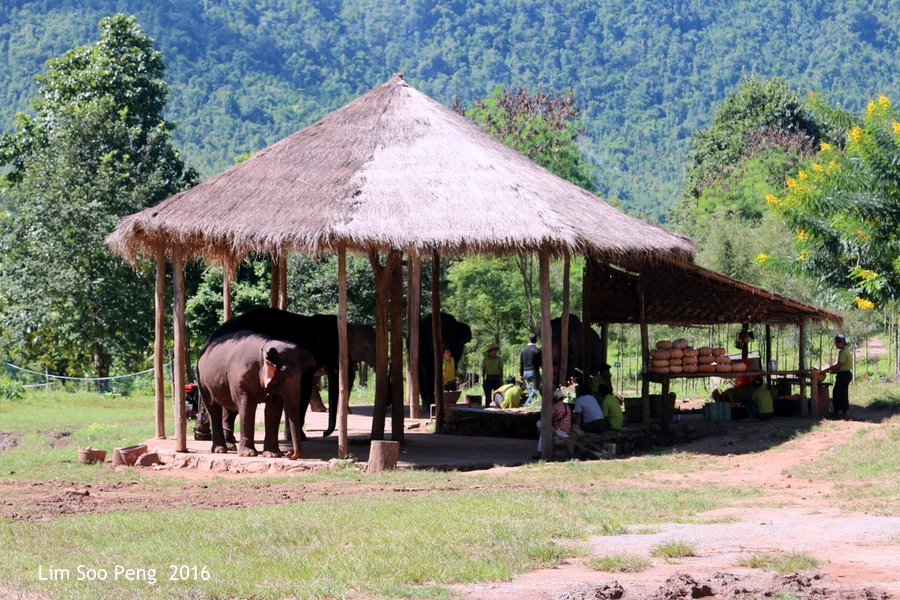 Day 3.7 ~ Visit to the Green Hill Valley Elephant Camp - Bath Time for the Elephants